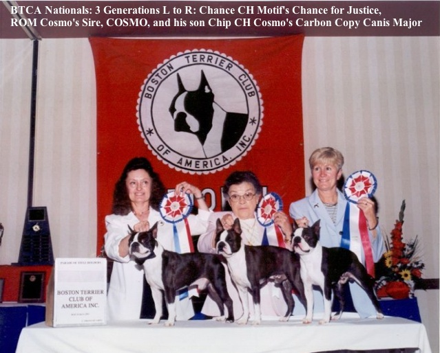 Boston Terrier Club Nationals