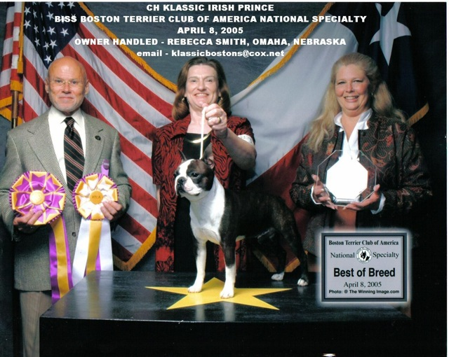 BH Boston Terrier: top ten non sporting dogs