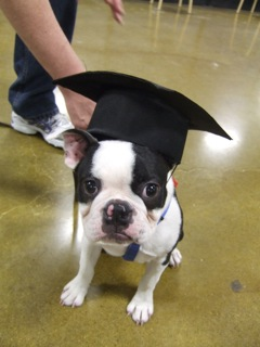 Boston puppy graduation Kindergarten