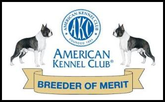 Breeder of Merit: American Kennel Club: Boston Terrier