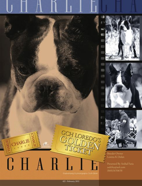 "GCH Loredo's Gold Ticket ""Charlie"" Boston Terrier"