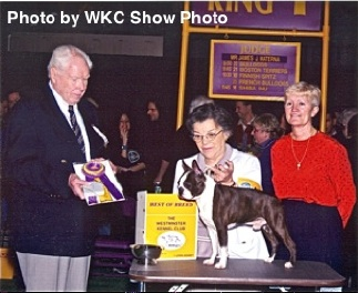 Westminter Kennel Club champion Boston