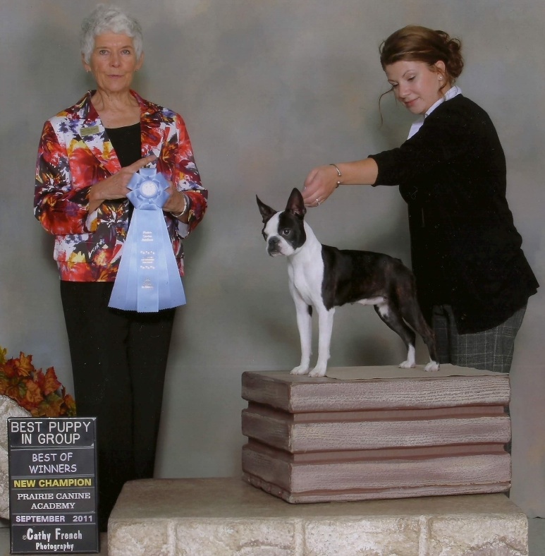 Canadian CKC Boston Terrier 2012